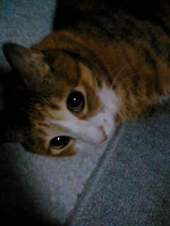 可哀想な猫